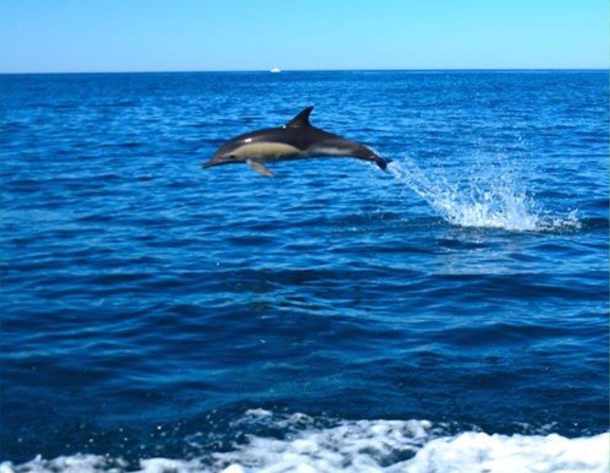 Sorties dauphin, rendez-vous au printemps 2021